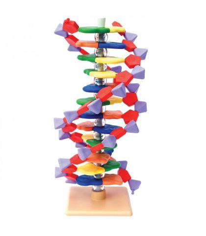 MODELE MOLECULAIRE ARN 12 BASES
